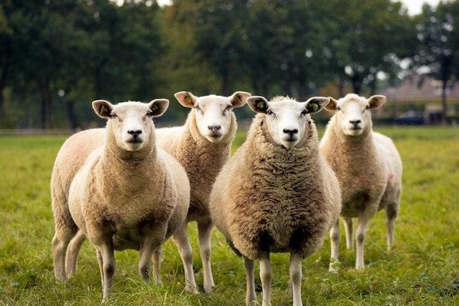 investir en bourse pas suivre le troupeau