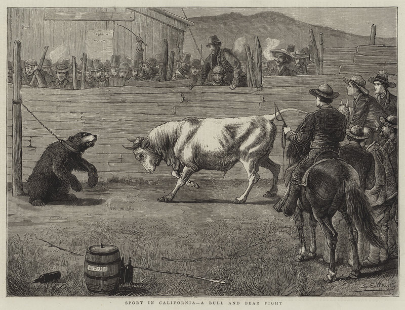 ours ou taureau