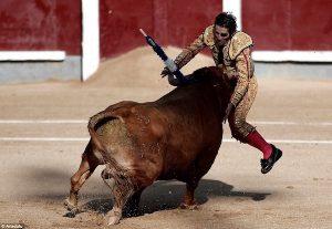 taureau charge