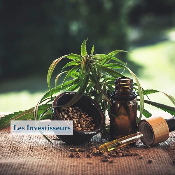 caracteristiques du cannabis