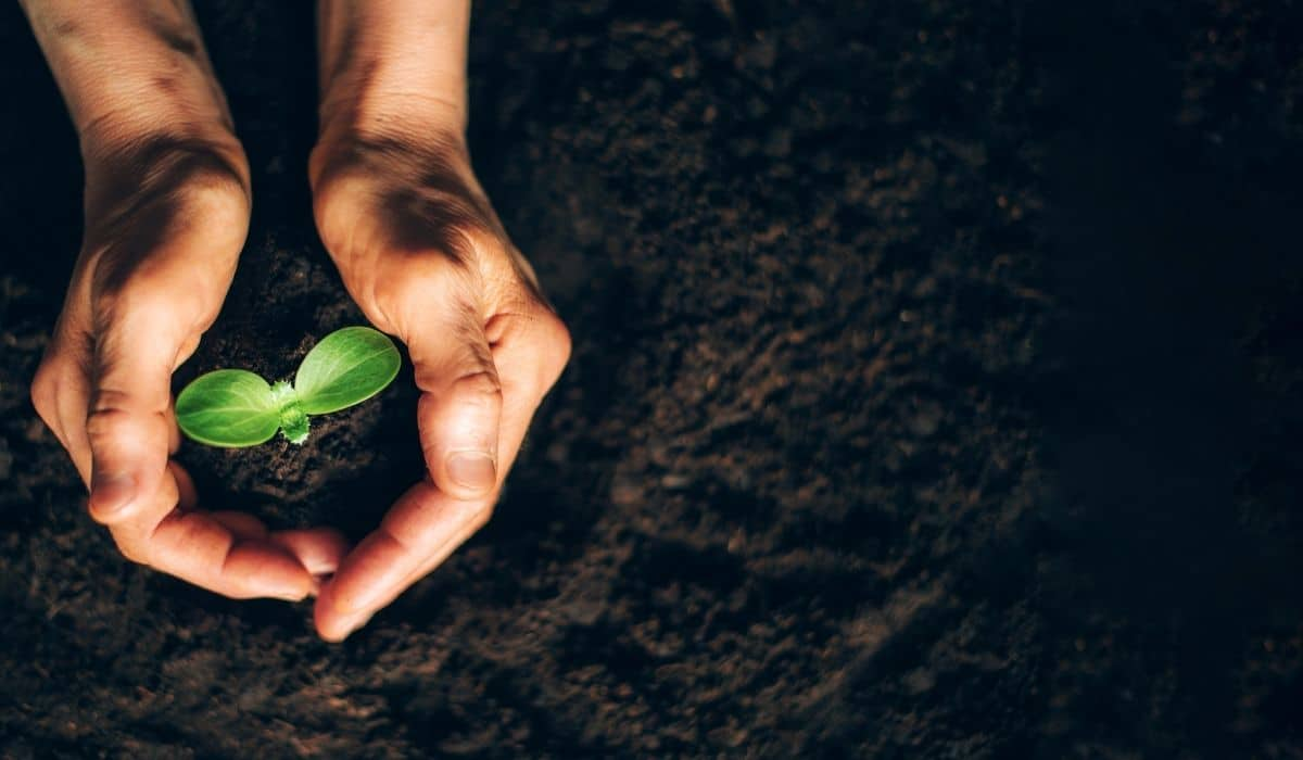 les investisseurs qui sommes-nous investir plante main terre
